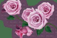 rose, fleur, garden,summer,deko,Pelageya