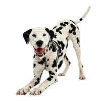 Dog-dalmat-NitsaPapacon