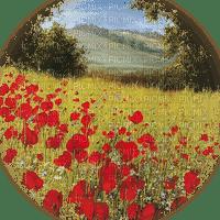 coquelicot paysage poppy flower landscape