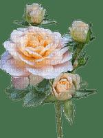 kukka flower fleur roses rose