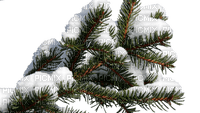 branch fir arbre tanne tree winter hiver snow neige