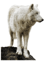 Kaz_Creations Animals Wolves