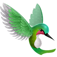 humming bird excotic oiseaux