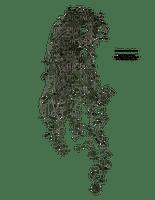 hanging plants, sunhsine3