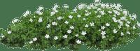 plants katrin
