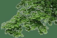 arbre feuilles feuille decoration décoration smiraikun smkstan6 smkstanarbre
