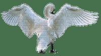 Swan1 NitsaP