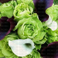 Green Mauve Vert Purple Roses