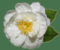 flower fleur kukka rose ruusu