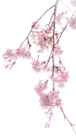 Fleurs.Branche.Pink.Flowers.Victoriabea