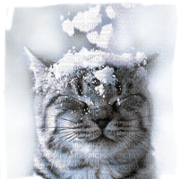 winter cat  snow chat hiver