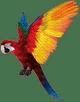 Parrot birds bp
