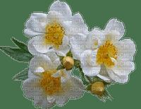 kukka, flower, fleur, rose, ruusu