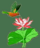 colibri- humming-bird-fleur lotus