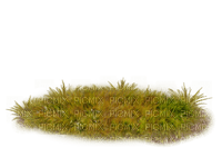 gräs-höst---.-grass-autumn