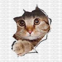 Katze, Hintergrund