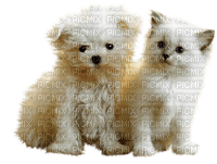 dog and cat white chat chien blanc