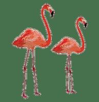 bird - flamingo - Nitsa P