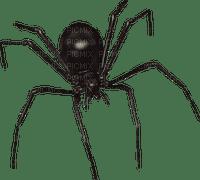minou-halloween-spider