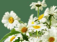 frame,camomilles,fleur,summer,tube, deko,scrapbooking Pelageya
