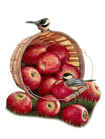 panier de pommes  deco basket with apple
