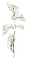 Silver.leaves.feuilles.branch.Victoriabea