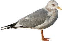 gull_mouette_bird_Oiseau-Blue DREAM 70