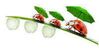 spring printemps frühling primavera весна wiosna tube deco grass gras ladybug marienkäfer insect  coccinelle garden jardin