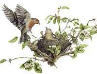 uccelli 2