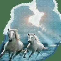 couple horses chevaux blanc
