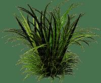 grass gras herbe plant plante rasen la pelouse lawn meadow spring printemps frühling primavera весна wiosna tube deco garden jardin