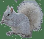écureuil blanc
