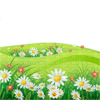 spring meadow daisies