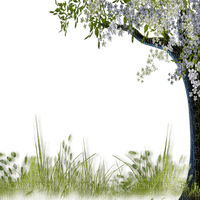 spring tree border deco printemps  arbre herbe