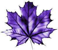 autumn purple leaves automne violet feuilles 🍁