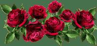 red roses, ruusu, rose, kukka, flower fleur