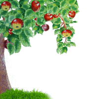 tree arbre baum  apple garden