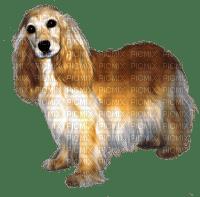 hund--dog