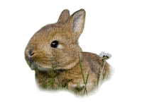 bunny hare hasen lièvre  sweet  easter Pâques Paques  ostern animal animaux tube