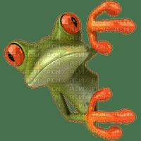 aze grenouille  vert green