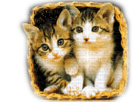 CATS IN BASKET chats panier