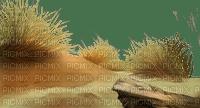 BEACH SAND GRASS  STONE