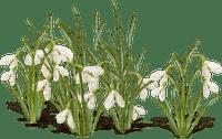 spring printemps blanc grass deco tube flower fleur blumen blossoms fleurs snowdrop