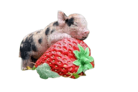 pig schwein porc farm tube animal animals animaux mignon fun berry strawberry spring printemps summer ete