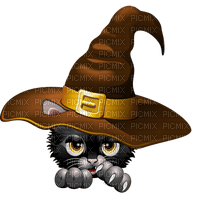 cat Pelageya