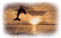 dolphin delphin dauphin sea meer mer ocean océan ozean water animals fish tube sunset fond background summer ete