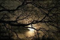 maisema landscape syksy autumn darkness