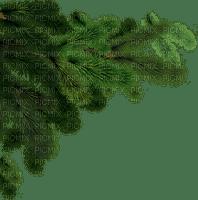 christmas noel fir branch branches