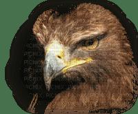tube aigle