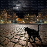 cat black night stroll chat noir